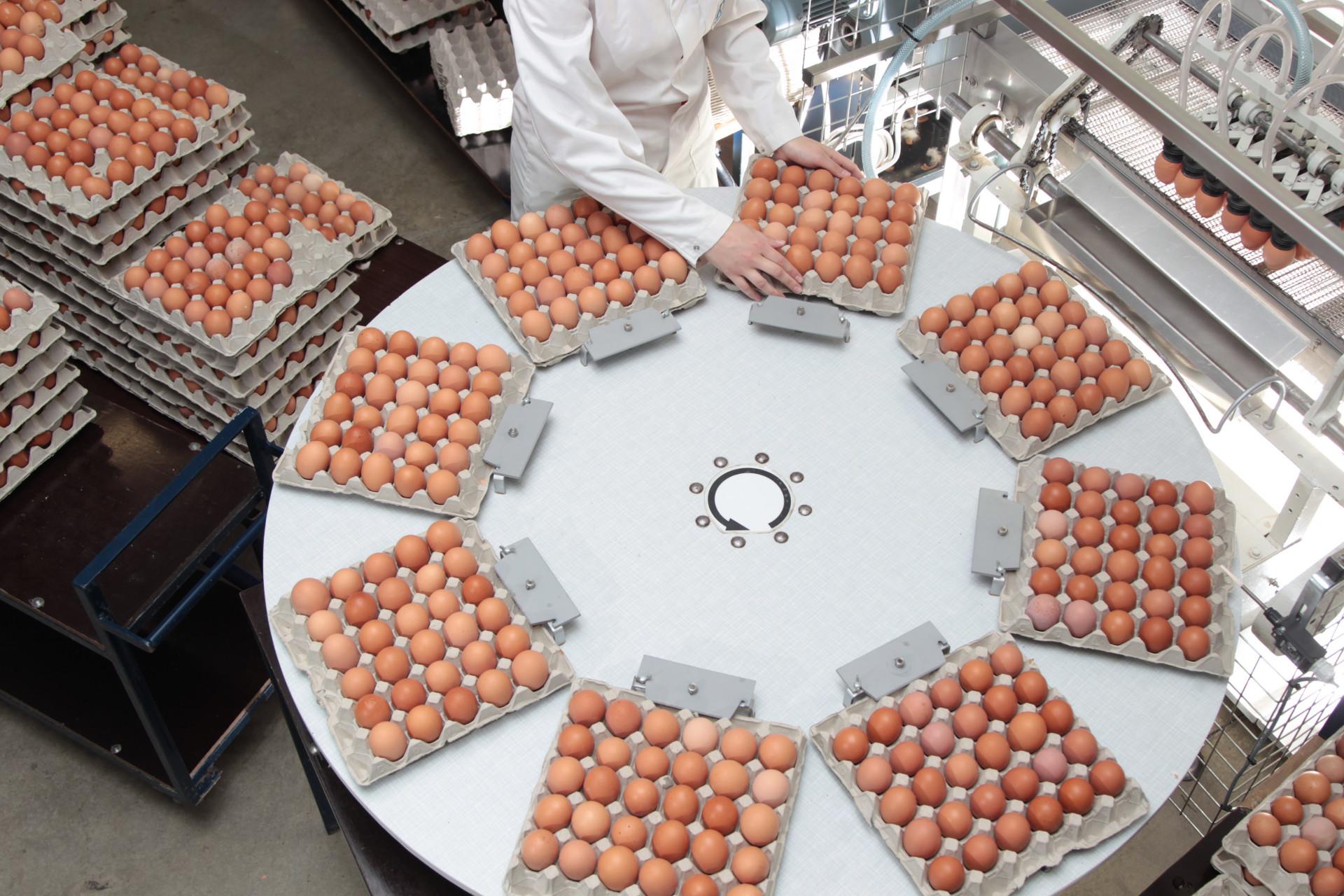 Foto: Eier-Sortierung in der Packstelle