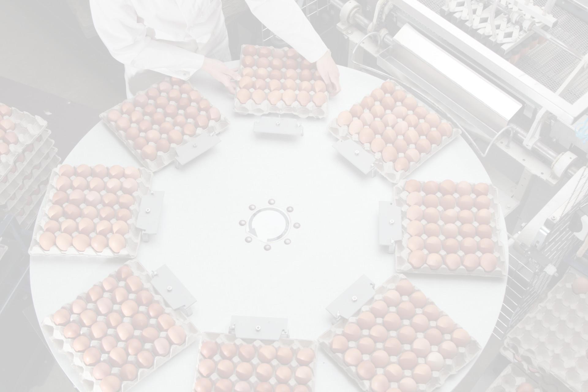 Fotohintergrund: Eiersortierung