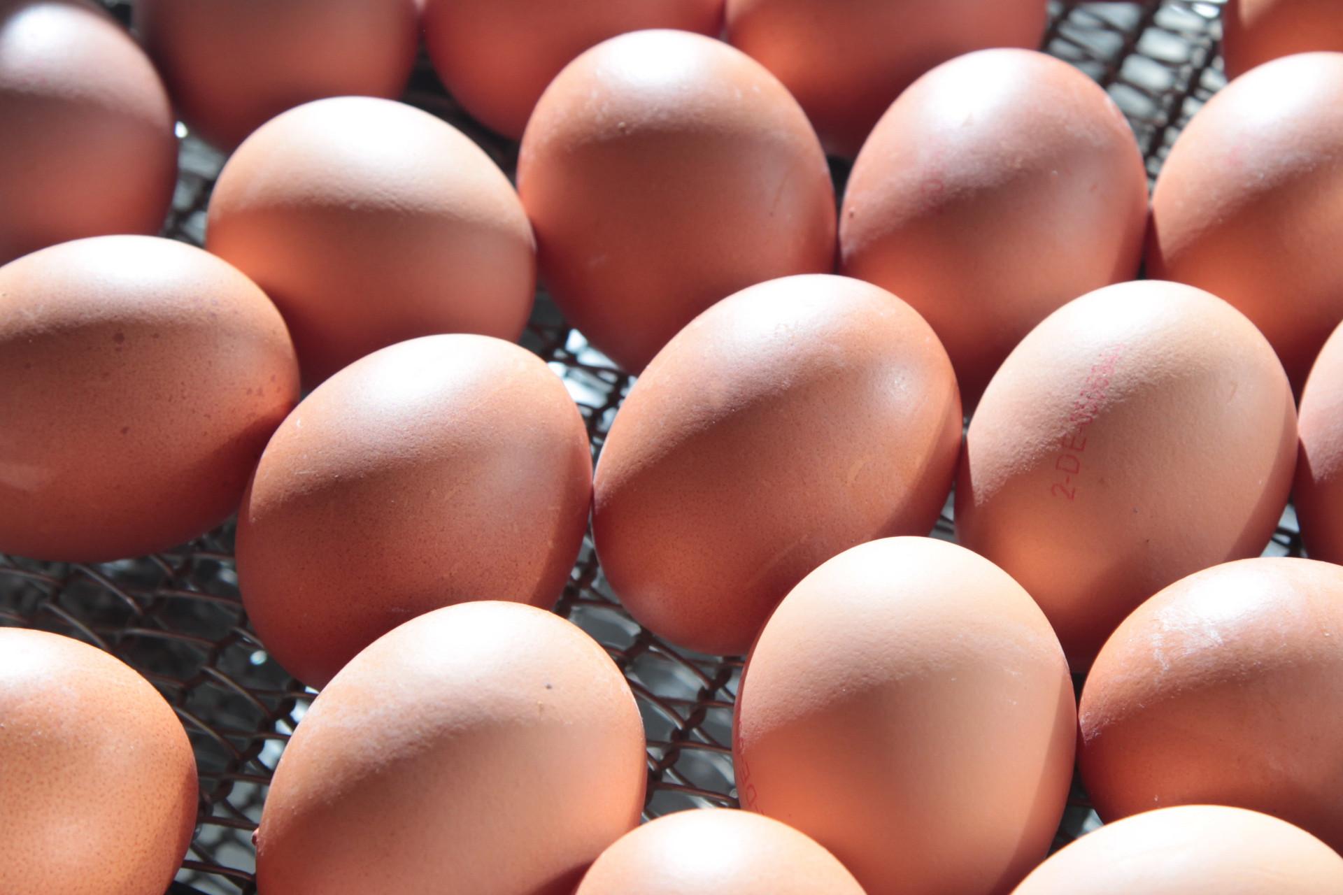Foto: Eier in der Sortierung
