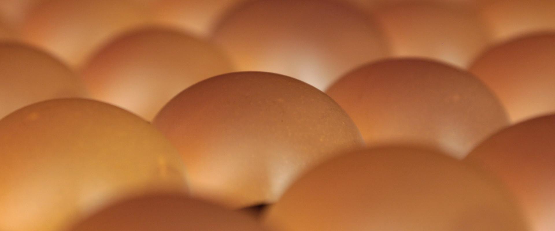 Foto: durchleuchtete Eier