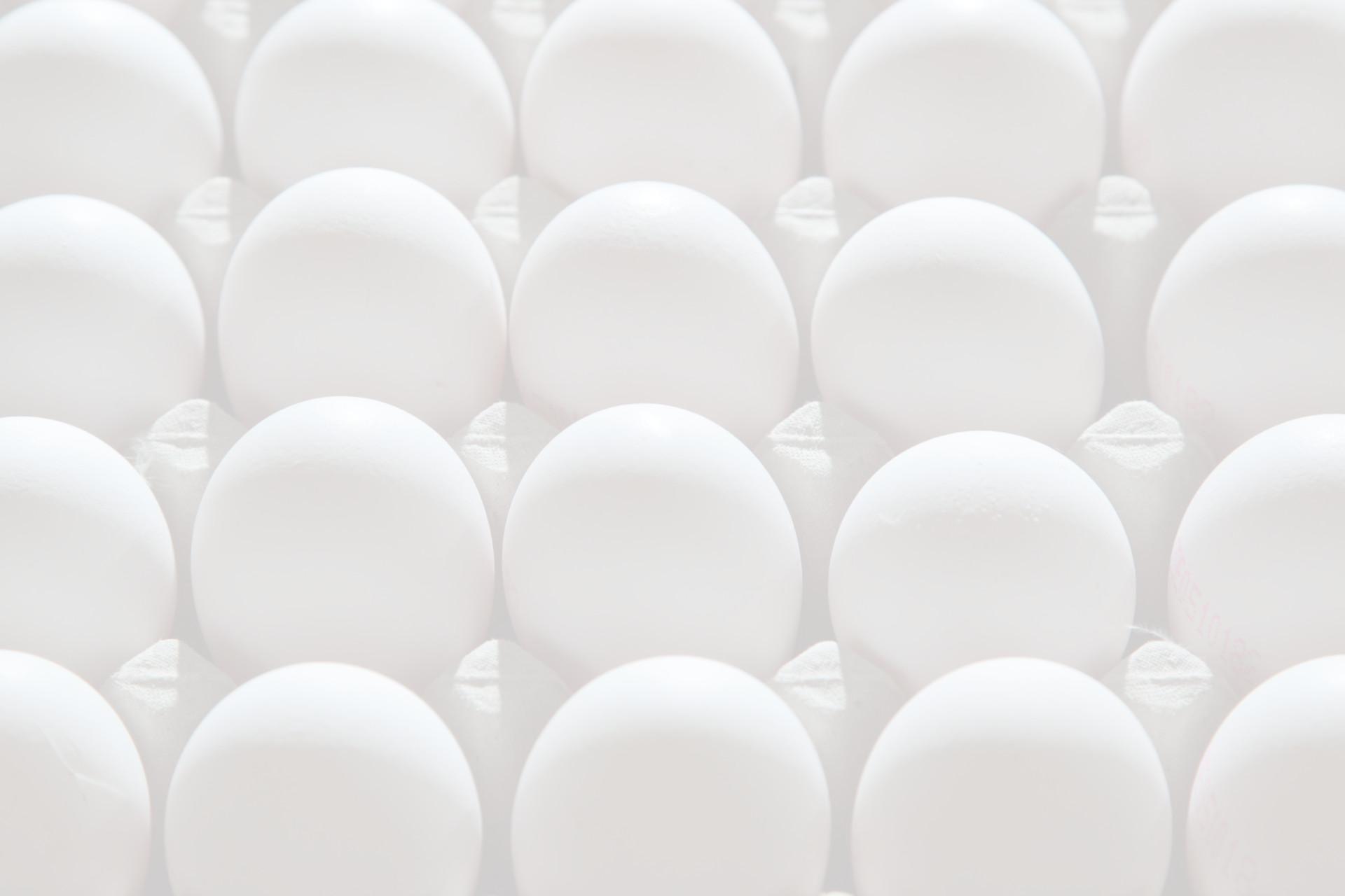 Fotohintergrund: Eier
