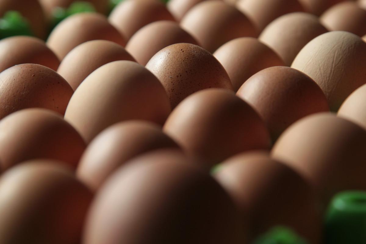 Foto: frische sortierte Eier