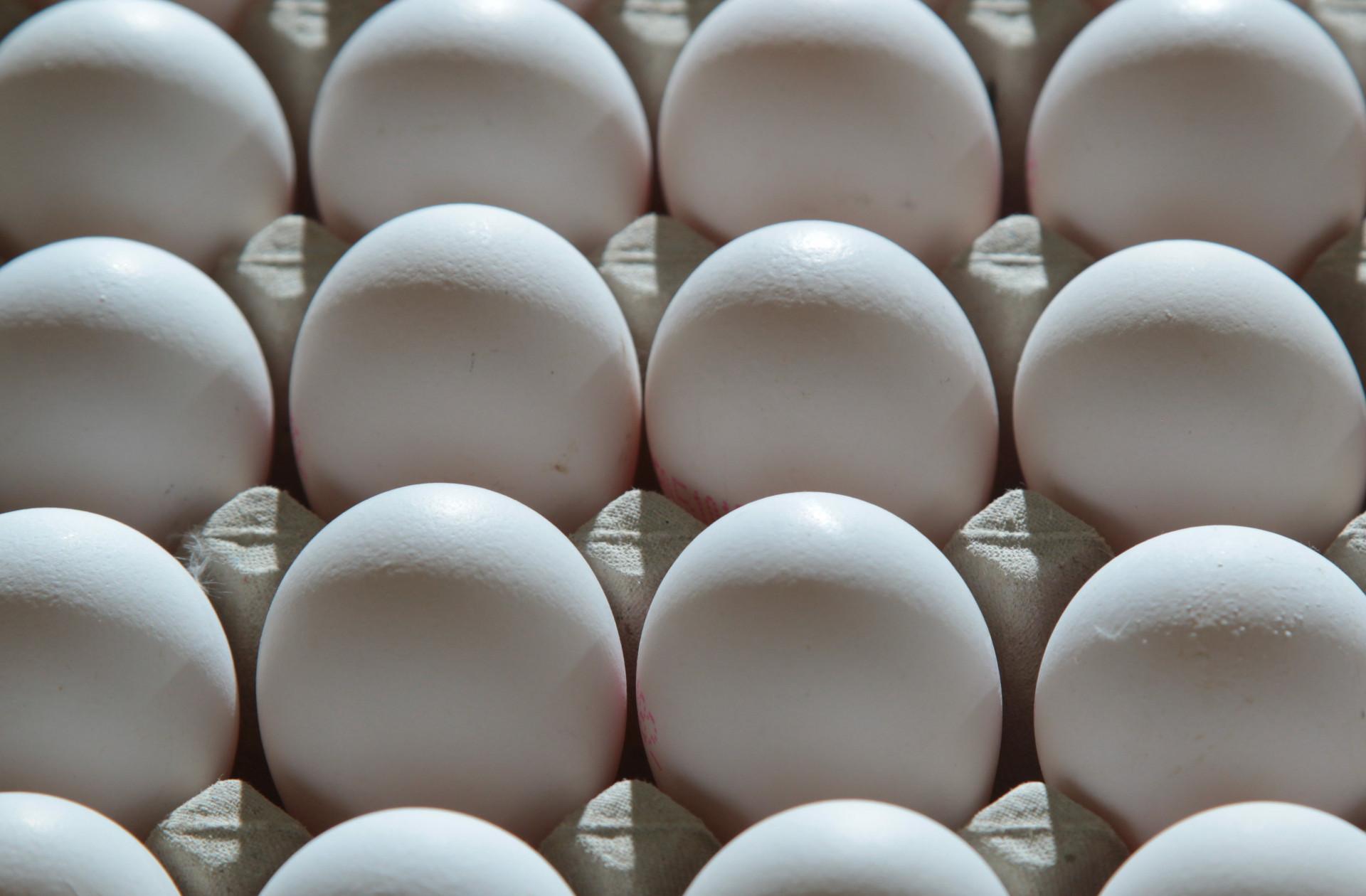 Foto: frische Hühnereier