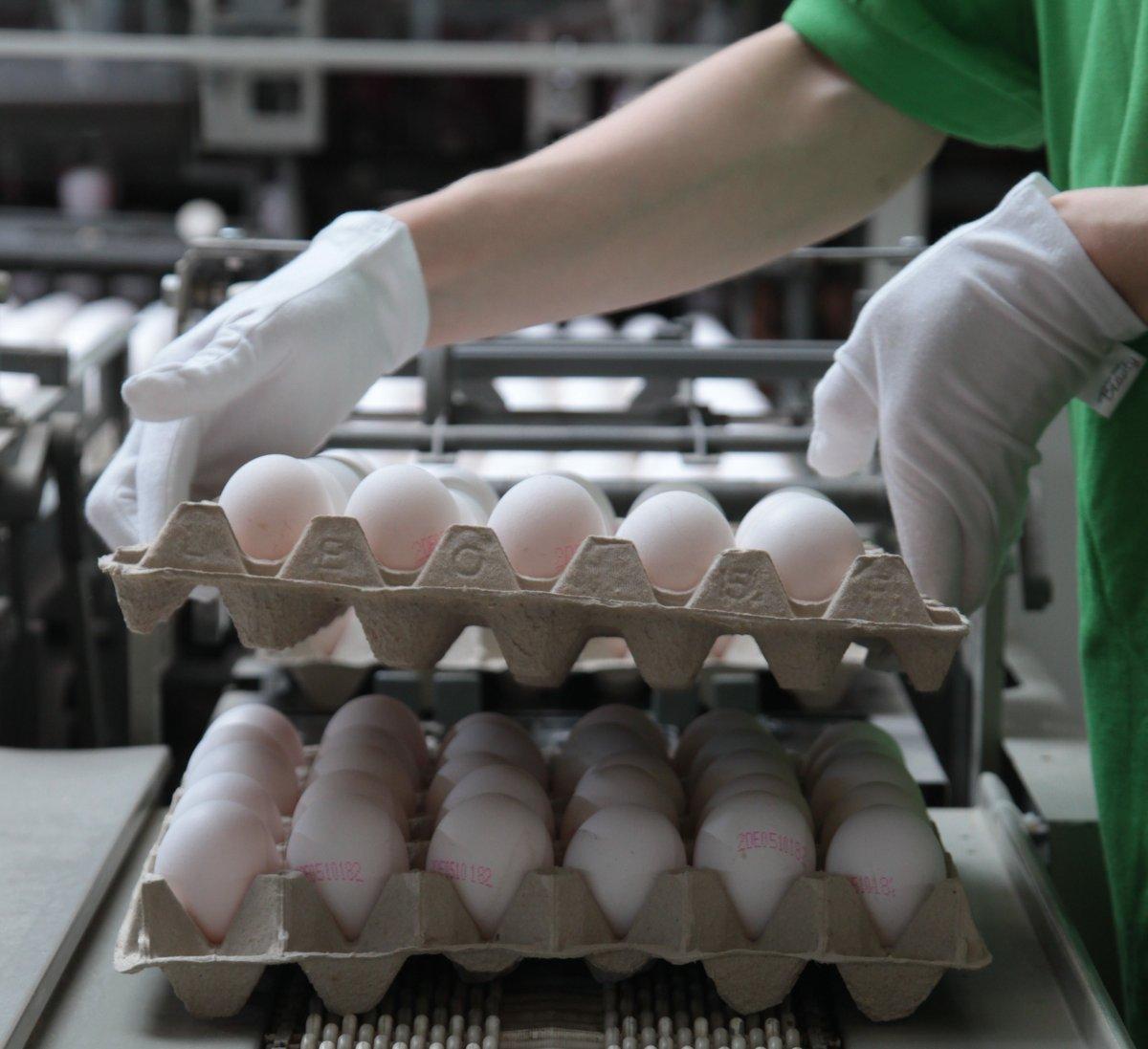 Foto: Eier-Verpackung in der Packstelle