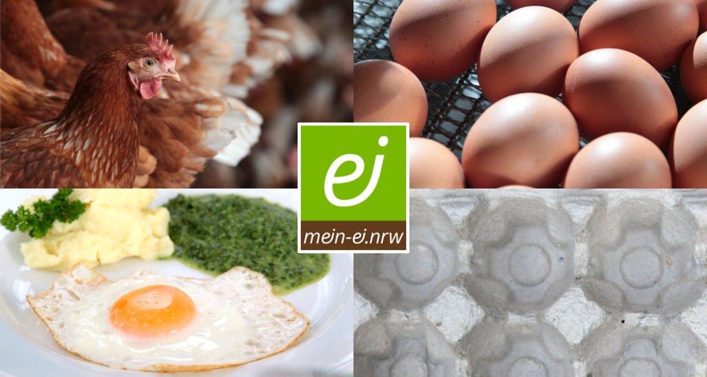 Foto-Montage: gegen Lebensmittelverluste beim Ei
