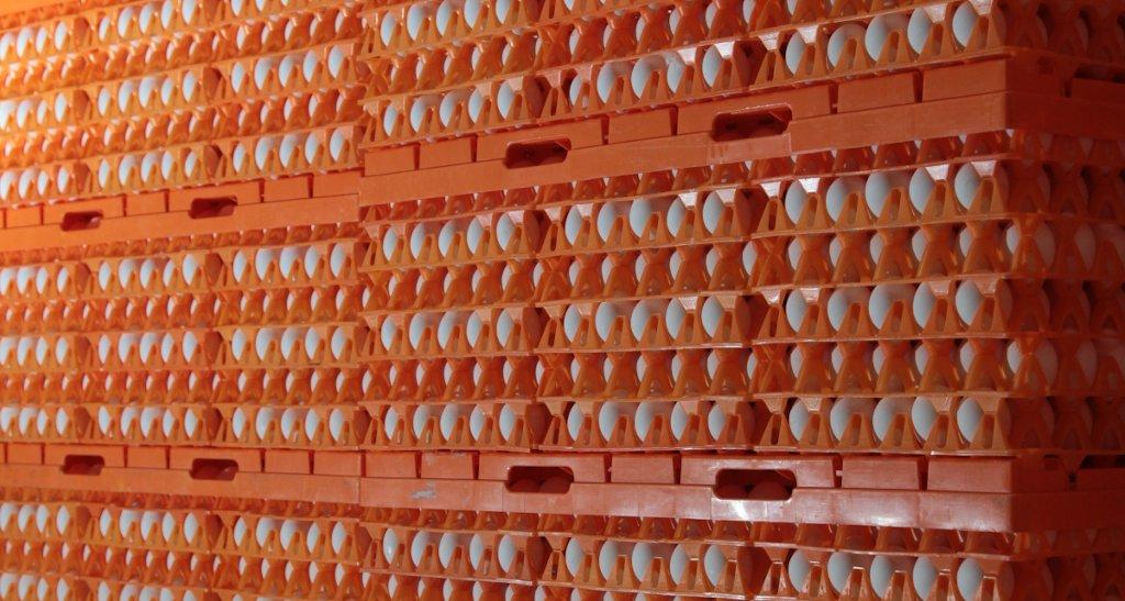 Foto: frische Hühnereier auf Kunststoff-Trays